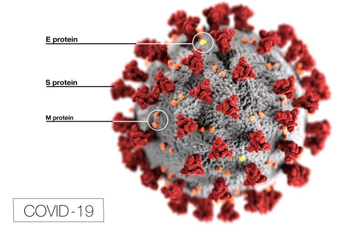 Picture of COVID-19 virus: E protein, S protein, N protein